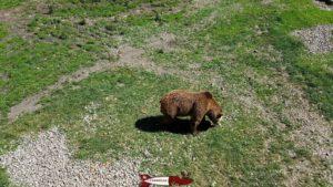 ours au juraparc de Vallorbe