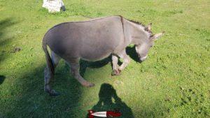 un âne au juraparc à vallorbe