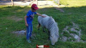 Une poney au juraparc à vallorbe