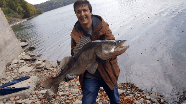 Il est possible de pêcher dans le lac de Gruyère avec ici un sandre d'un mètre de long sorti du lac en 2017