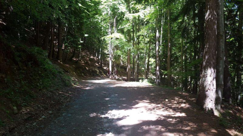 L'accès aux gorges du Dailley se fait par un chemin forrestier.