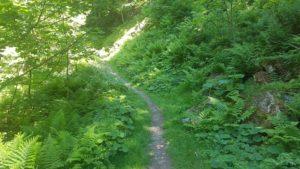 Le chemin menant au col de la Matze - gorges du dailley