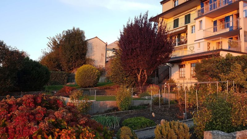 Les jardins potagers dans le château et remparts de Romont