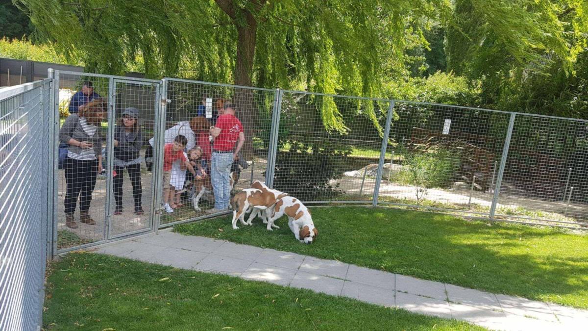 Un accompagnant permet à quelques enfants de caresser un chien au barryland en ville de Martigny