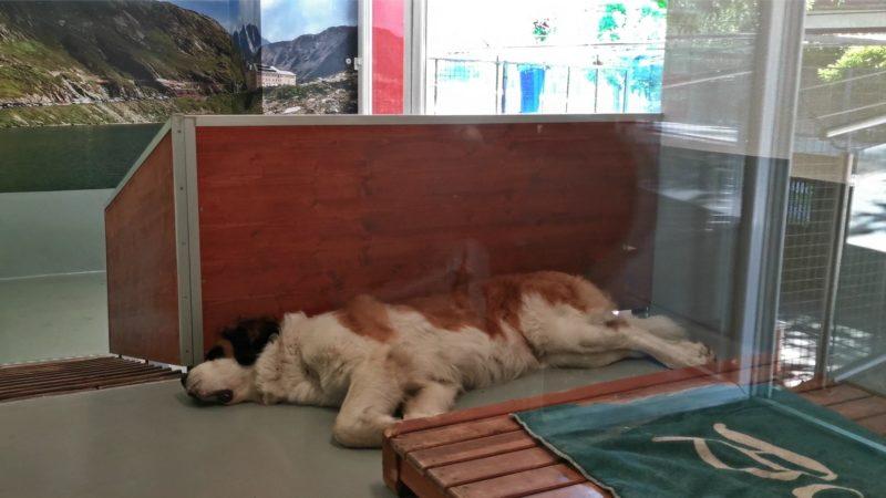 Un chien en train de dormir en intérieur.