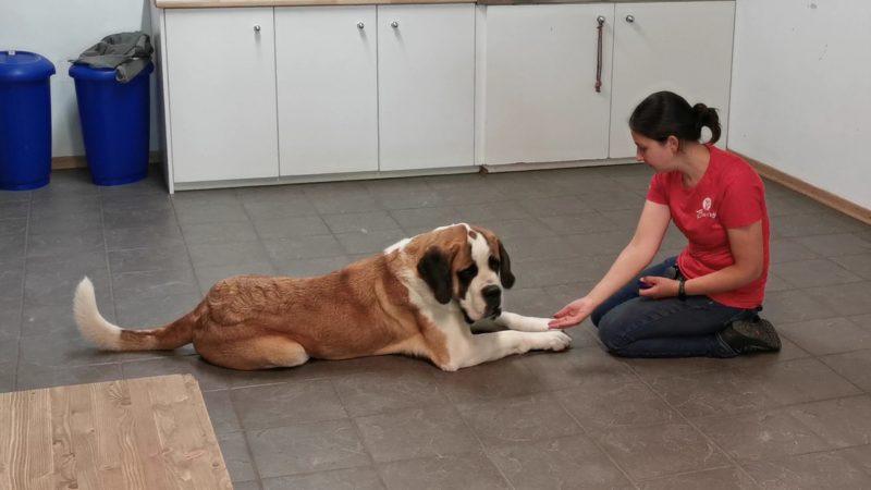 Une soignante en train de d'éduquer un chien.