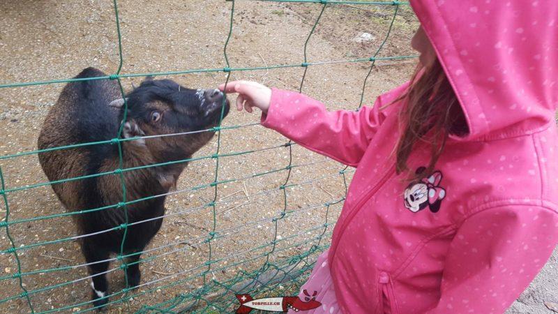 Un enfant caressant une chèvre à travers le grillage.