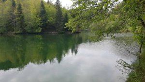 Lac artificiel à l'Arboretum d'Aubonne
