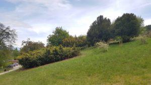 Arbres à l'Arboretum d'Aubonne