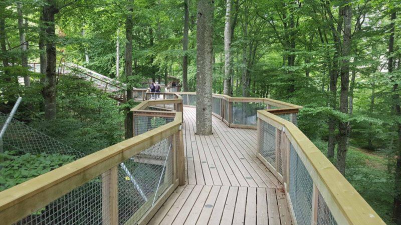 Un passage dans la forêt au dessus des enclos.