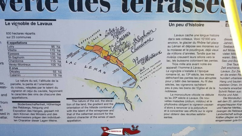 Informations sur les cépages au dezaley sur le passage du train LAvaux Express Cully