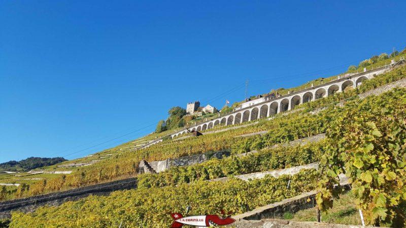 Vur sur le vignoble et la tour de Marsens depuis le Lavaux Express Cully