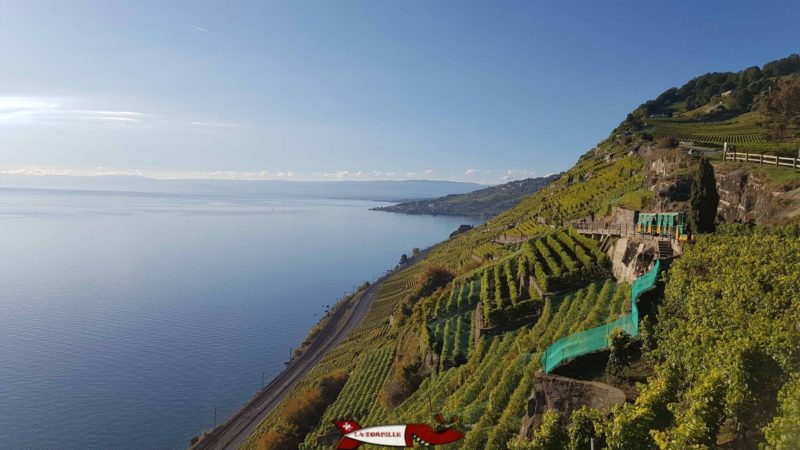 Le petit train du Lavaux Express Cully permet de découvrir le vignoble du Lavaux classé au patrimoine mondiale de l'UNESCO et en particulier le Dézaley et son coteau qui plonge dans le Léman.