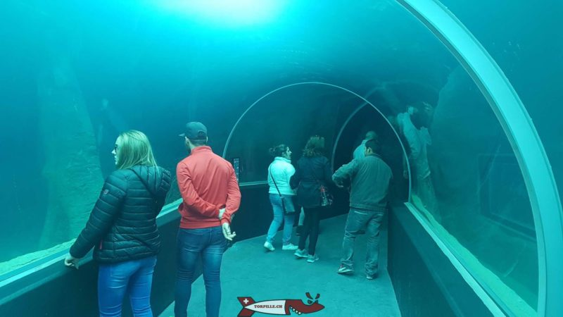 A tunnel under an aquarium at Aquatis on the heights of Lausanne.
