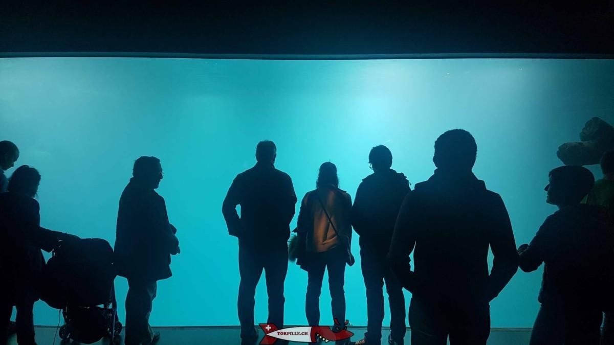 Des visiteurs devant un aquarium d'Aquatis.