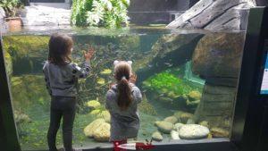 Un aquarium à Aquatis