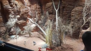 Un terrarium à Aquatis