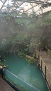la serre tropicale à Aquatis