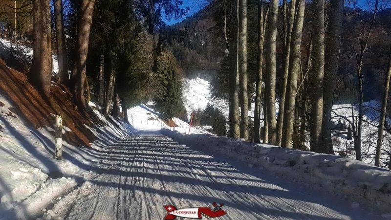 La piste de luge d'hiver aux Avants dans la forêt