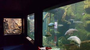 Plusieurs aquariums du musée du léman.