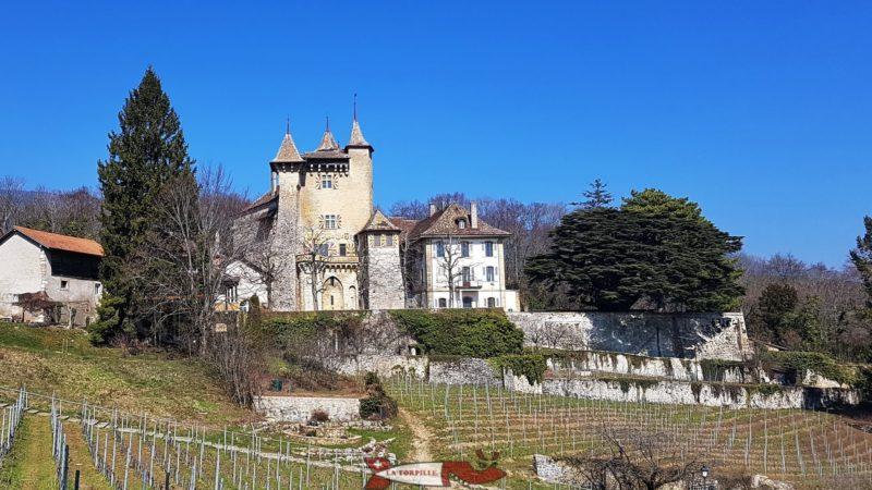 château de vaumarcus avec le cèdre