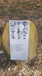 information à l'arboretum tronches d'arbres