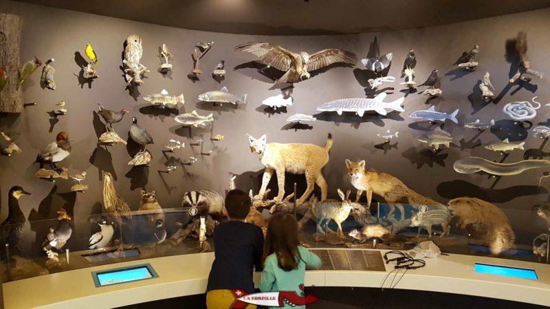 animaux naturalisés à la maison de la rivière
