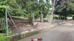 Espèce de la faune sauvage européenne au zoo du bois du petit-chateau