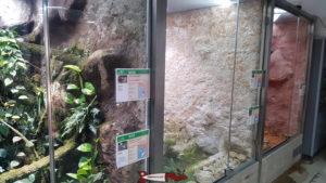 Des terrariums contenant des serpents au vivarium du zoo du bois du petit-chateau
