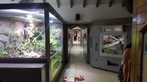 long couloir avec des deux côtés des terrariums au zoo du bois du petit-chateau