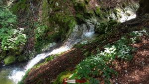 La rivière Arnon coulant dans les gorges de Covatannaz