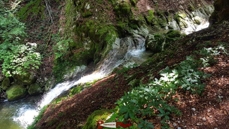 Les gorges de Covatannaz font partie des plus belles gorges de Suisse Romande