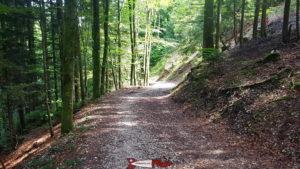 le chemin forrestier le long des gorges de covatannaz