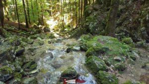 Après avoir passé sous le petit pont en bois, l'eau venant de la cascade de Môtiers forme une joli torrent dans la forêt.
