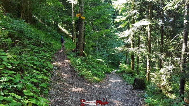 L'embranchement sur le chemin du retour des gorges de la Poëta-Raisse et le parcours sur la gauche pour prendre le chemin des crêtes.