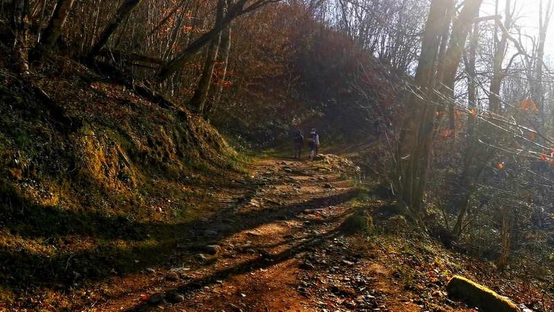 Le chemin dans la forêt.