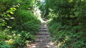 les escaliers dans la forêt pour aller à la tine de Conflens