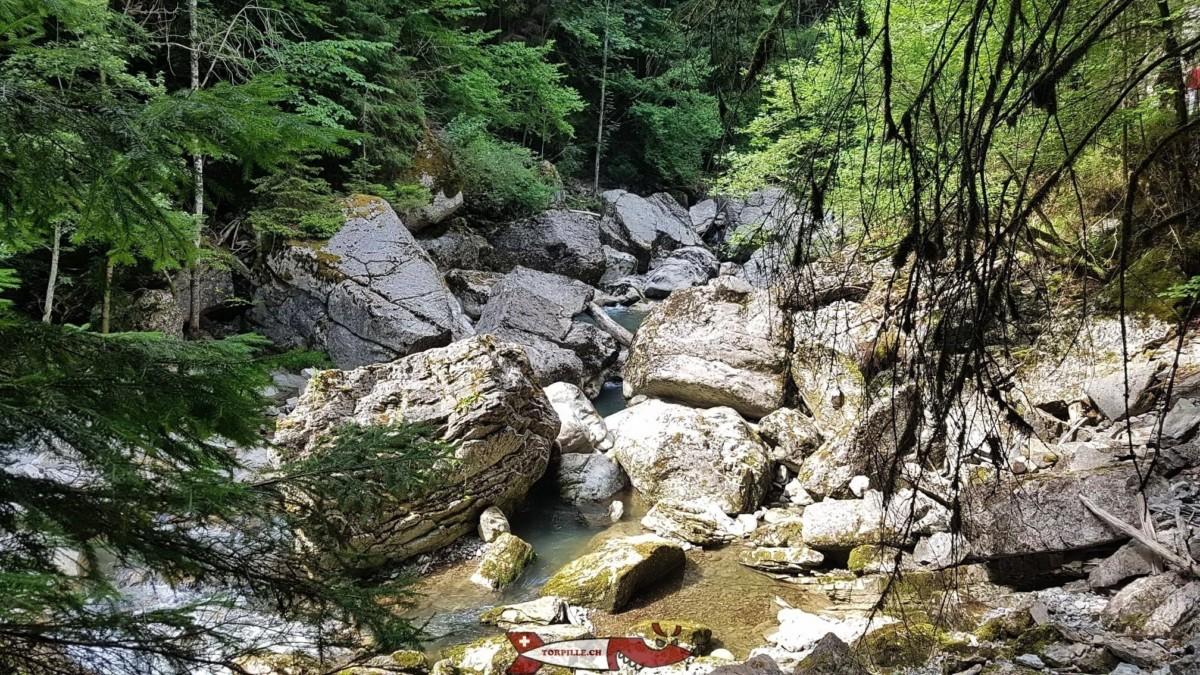 Les gorges de la Jogne depuis la passerelle qui traverse la rivière.
