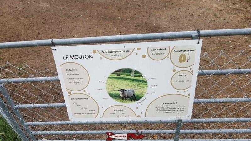 Chaque animal de la ferme à sa fiche descriptive à l'Arche de Crétillons