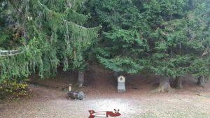 l'entrée du chemin dans la forêt pour accéder à la statue du Christ-Roi