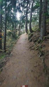 le chemin dans la forêt pour accéder à la statue du Christ-Roi