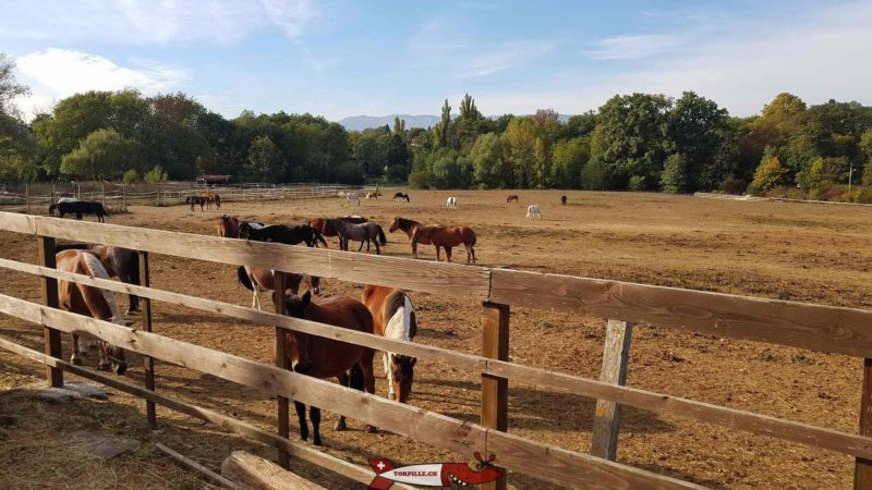 Horses in the meadow at the Gavotte's farm