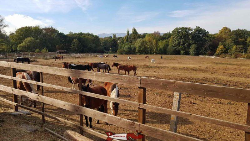 Chevaux au pré à la ferme de la Gavotte