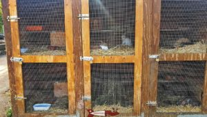 Rabbit hutches at the Gavotte's farm
