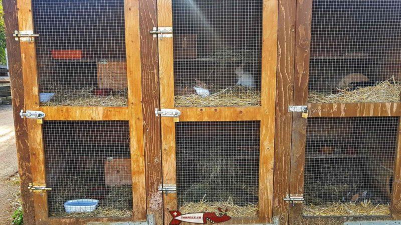 Les clapiers à lapins à la ferme de la Gavotte