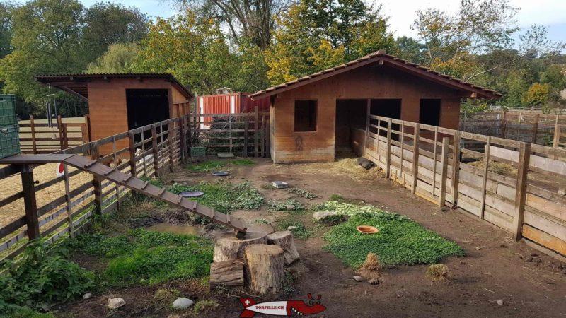 cochon à la ferme de la Gavotte
