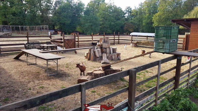 Le petit parc des chèvres à la ferme de la Gavotte