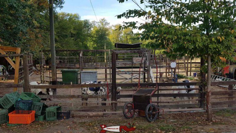 Les poneys prêts pour une balade avec les enfants à la ferme de la Gavotte