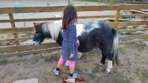 Ponies at the Gavotte's farm