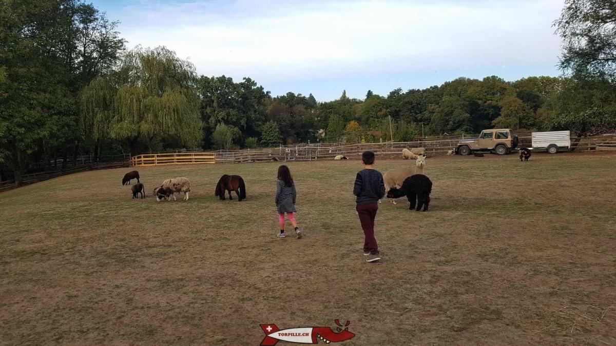Les juniors de la Torpille se baladent dans l'enclos de la ferme de la Gavotte où les enfants peuvent caresser moutons, poneys, ânes et chèvres.